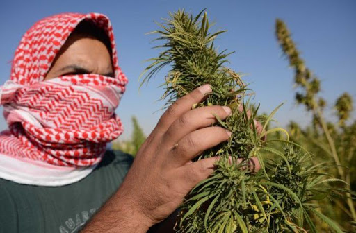 Lebanon Has Legalized Cannabis Farming In The Country